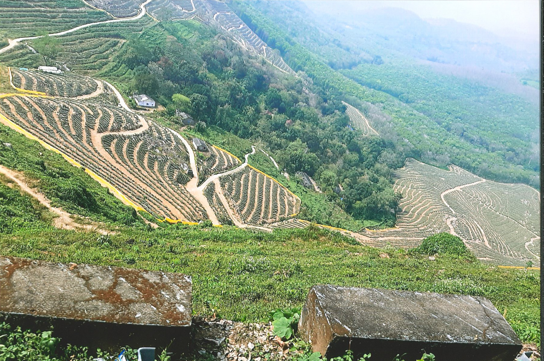 A photo showing a patchwork of farmland from a hillside.